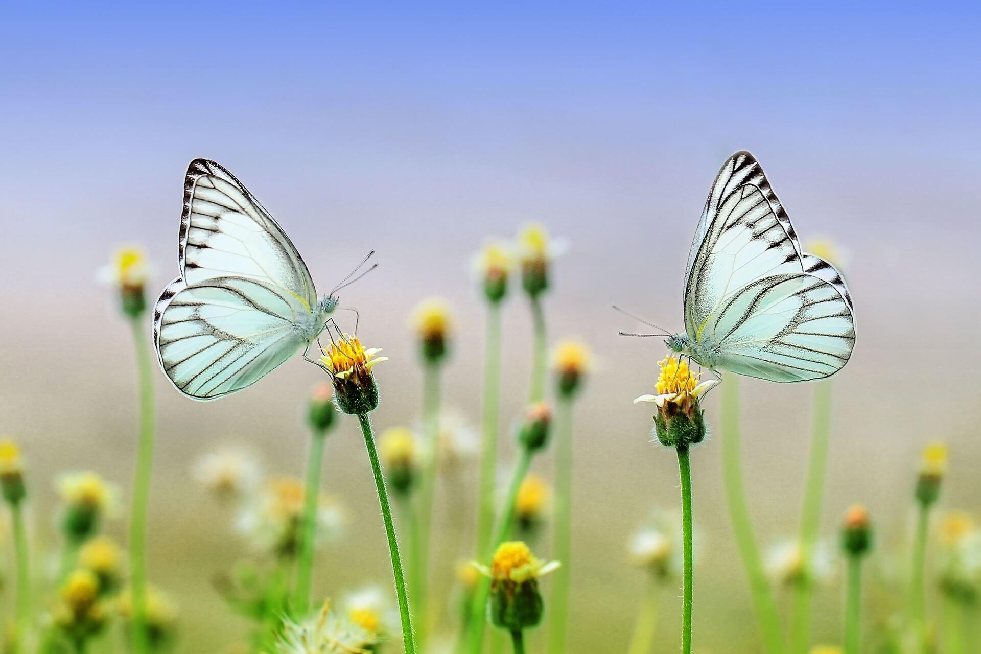 Rolgordijn met een vlinder print op maat